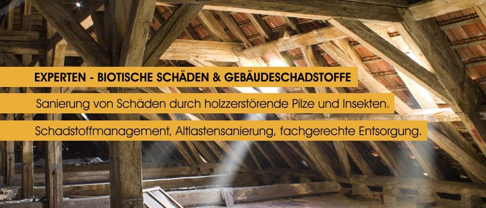 Experten - Biotische Schaeden und Gebaeudeschadstoffe - Sanierung von Schaeden holzzerstoerender Pilze und Insekten - Schadstoffmanagement, Altlastensanierung, Entsorgung - www.sanmoritz.de